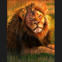 Pastel Portrait of Cecil the Lion created by Carol S Sakai, Artist